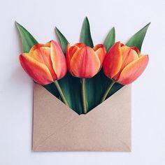 «✉️ Tulips»