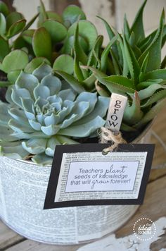 Teacher Gift: Succulent Garden with Free Printable Tag  |  The Idea Room