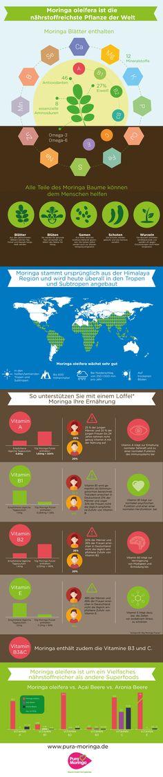 Eine Moringa Infografik erklärt die Pflanze Moringa oleifera