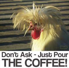 Who knew that in the year 2016 chickens would actually be cool? While it seems pretty far-fetched, it's true. Chickens have become hipster territory, with Coffee Is Life, I Love Coffee, My Coffee, Happy Coffee, Coffee Corner, Monday Coffee, Coffee Jokes, Coffee Signs, Funny Coffee