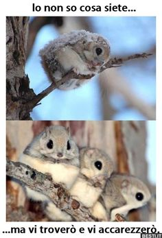 Funny pictures about Japanese Flying Squirrels Are Adorable. Oh, and cool pics about Japanese Flying Squirrels Are Adorable. Also, Japanese Flying Squirrels Are Adorable photos. Cute Creatures, Beautiful Creatures, Animals Beautiful, Cute Baby Animals, Animals And Pets, Funny Animals, Wild Animals, Strange Animals, Japanese Dwarf Flying Squirrel