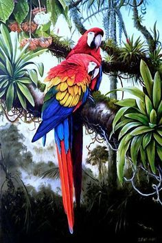 Tropical Art, Tropical Birds, Exotic Birds, Colorful Birds, Jungle Art, Bird Illustration, Bird Drawings, Bird Pictures, Wildlife Art