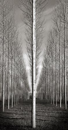 Aligned by J. Monochrome Photography, Black And White Photography, Fine Art Photography, Amazing Photography, Landscape Photography, Nature Photography, Photography Ideas, Great Photos, Cool Pictures
