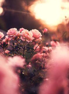 (notitle) - 《The most beautiful from nature》 - - Blumen - Wallpaper Flor Iphone Wallpaper, Aesthetic Iphone Wallpaper, Flower Wallpaper, Nature Wallpaper, Aesthetic Wallpapers, Wallpaper Backgrounds, Spring Flowers Wallpaper, Fond Design, Autumn Rose
