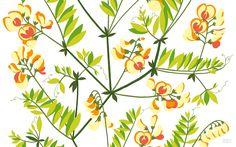 August-2011-Wallpaper-Hiirenvirna-1920×1200.jpg (1920×1200)