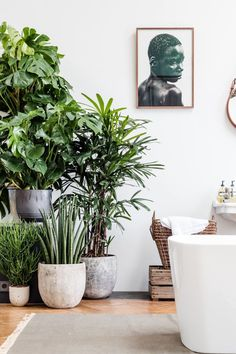 Bright white bathroom with freestanding bath and lush Botanical green potted houseplants in the bathroom