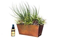 Hinterland Trading Large Air Plant Assortment Centerpiece In Copper Planter with 2 Ounce Fertilizer 21 Count >>> Click on the gardening image for additional details.