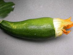 Blossom end rot - squash Growing Zucchini, Squash, Pumpkins, Larger, Layout, Outdoors, Gardening, Vegetables, Green