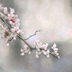 Minimalist Modern Pink Gray Photograph Spring Flower Photography Bokeh Soft Feminine Pink Flower Photograph French  Chic