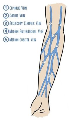 Nurse Discover 10 IV Insertion Tips for Nurses IV insertion - vein anatomy Nursing Iv, Nursing School Notes, Cardiac Nursing, Nursing Mnemonics, Funny Nursing, Medical School, Iv Insertion, Nursing Information, Study Tips