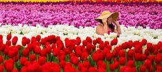 Risultati immagini per primavera immagini