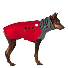 Doberman Pinscher Dog Winter Coat (Red Coat with Grey Hood