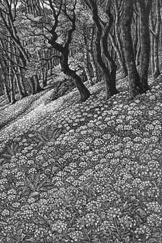 Wood engraving artist Sue Scullard portfolio of prints she is based in Kent, UK