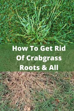 Grow Grass Fast, How To Kill Grass, Growing Grass, Planting Ginger Root, Large Garden Pots, Weed Killer Homemade, Weeds In Lawn, Lawn Care Tips, Lawn And Garden