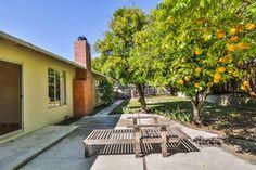 Mature Fruit Trees in Yard