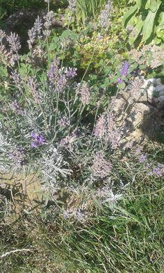 Zauberöl – Alternatives Leben einer hochsensiblen Familie Plants, Alternative, Life, Flora, Plant