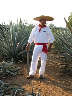 A jimador in traditional garb near the Jose Cuervo distillery in Tequila, Mexico.