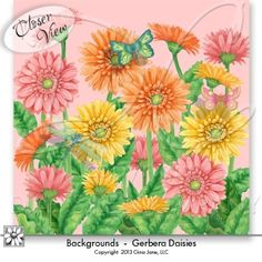 Gerbera Daisies Backgrounds for scrapbook pages, digital crafts, printables, hand made cards and more! Gina Jane Designs - DAISIE Company