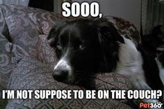 Playful Paws: See What Pets are Really Thinking... - Pet360.com