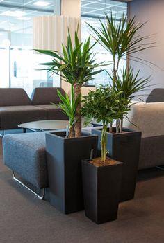 Grønne planter er bra for oss Indoor Green Plants, Planter Pots, Living Room, Interior, Home Decor, Gardens, Privacy Screens, Decoration Home, Indoor