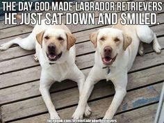 46 Best Sweet Animals Images I Love Dogs Doggies Pets