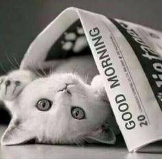 Cute Good Morning Cute Cat