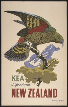 New Zealand Kea Alpine Parrot Bird Vintage Travel Advertisement Art Poster New Zealand Art, New Zealand Travel, Retro Poster, Poster Vintage, Tourism Poster, Bird Poster, Nz Art, Kunst Poster, Kiwiana