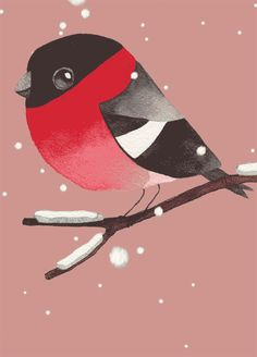 xmas-bullfinch by Matt Sewell