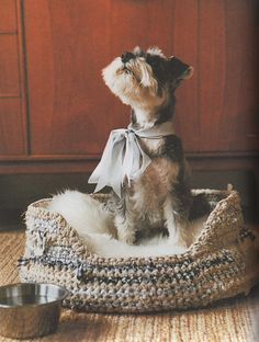 "sweet and simple crochet patters - loved this book. and the chance to ""meet"" the authot on ravelry. Ravelry: Rag Pet Bed pattern by Erika Knight Schnauzer Puppy, Miniature Schnauzer, Crochet Home, Knit Or Crochet, Simple Crochet, Crochet Things, Ravelry, Shelter, Dog Sweaters"