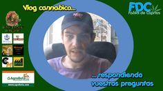 Vlog cannabico|Respondiendo vuestras preguntas y fumando