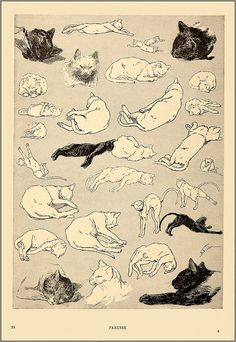 "Théophile Alexandre Steinlen [Swiss-born French Art Nouveau Painter and Printmaker, 1859-1923]  - ""Paresse"" (laziness)  - From his book: ""Des Chats: Images sans paroles"" aka ""Des Chats: Dessins sans paroles"" (Cats: Pictures without Words), 1897"