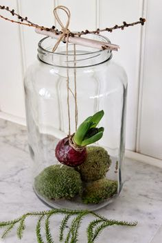 Houseplants for Better Sleep Bulb Plant In Mason Jar Deco Floral, Arte Floral, Flower Decorations, Christmas Decorations, Deco Nature, Bulb Flowers, Ikebana, Christmas Inspiration, Pretty Flowers