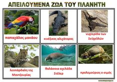 dreamskindergarten Το νηπιαγωγείο που ονειρεύομαι !: Πίνακες αναφοράς με τα ζώα του πλανήτη που κινδυνεύουν Animal Crafts, Endangered Species, Toys, Blog, Poster, Animals, Greek, Activity Toys, Animales