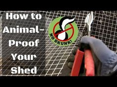 How to Animal-Proof a Shed (Skunk/Possum/Raccoon/Rodent/Groundhog/Squirrel) Shed Skirting Ideas, House Skirting, Skunk Smell In House, Diy Dog Run, Outside Sheds, Disaster Plan, Backyard Office, Shed Homes, Rodents