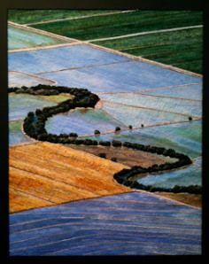 CA ricelands