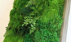 """Two Runner Up Winners will receive a set of two 14x14"""" Very Mossy Plant Paintings made with a variety of moss...Read more"""