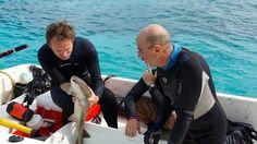 #Hoje #Inédito #documentário #Viagensedescobertas  Mais ou menos 5 MÈTRES - 21h30 - COM LEGENDA Dois episódios em sequência!  Episódio 1: Mergulhar com os tubarões Nas Bahamas Joe Bunni fotografa os tubarões-tigres. Apaixonado e defensor dos tubarões o Dr Gruber os estuda em um laboratório único no mundo. O oceano virou uma grande lixeira: o holandês Boyan Slat desenvolve um projeto para coletar o plástico e limpar o mar. Utopia ou necessidade?  Episódio 2: Acariciar as baleias Nos Açoures e…