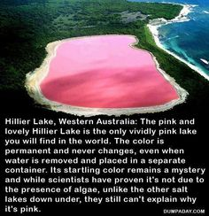 Pink Lake. Australia just some info I definetly want to spend my honey moon here