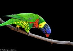 Birds / Aves / Colores / Colors