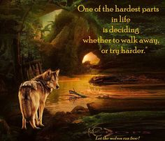 One of the hardest parts in life is deciding whether to walk away, or try harder. Wolf Images, Wolf Pictures, Wolf Spirit, My Spirit Animal, Meaningful Quotes, Inspirational Quotes, Motivational, Lone Wolf Quotes, Wolf Warriors
