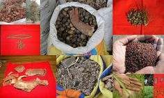 Medicinal Rice based Tribal Medicines for Diabetes Complications and Metabolic Disorders (TH Group-652) from Pankaj Oudhia's Medicinal Plant Database