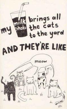 17 Classic Song Lyrics Significantly Improved By Cats - BuzzFeed Mobile