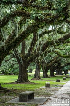 City Park, New Orleans, Louisiana. Zack Smith Photography, Location: Scout Oak Trees.