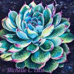 Succulent in the morning light original watercolor painting by Michelle C East. Green and turquoise succulent with reddish magenta tips. Visual texture created using the both table salt and rock salt in wet watercolors. Watercolor Paintings For Sale, Watercolor Painting Techniques, Watercolor Tips, Acrylic Painting Lessons, Watercolor Flowers, Watercolor Succulents, Floral Paintings, Painting Art, Cacti And Succulents