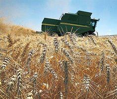 A principios del 2017 la Bolsa de Cereales de Córdoba presentó un informe agroeconómico sobre los resultados obtenidos en la campaña 2016/17 de trigo en campo propio para la Provincia de Córdoba. Por Gustavo PIcolla (*) Tomando como base el mencionad