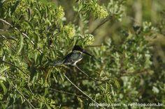 Animais - RepLago - Rep Lago - Acampamento - Natureza - Verde - mata - bicho - ave