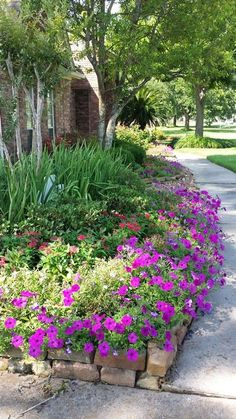 Spring petunias and flower bed.
