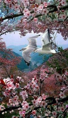 Beautiful Landscape Wallpaper, Beautiful Flowers Wallpapers, Beautiful Paintings, Pretty Birds, Beautiful Birds, Animals Beautiful, Balloons Photography, Nature Photography, Photography Tips