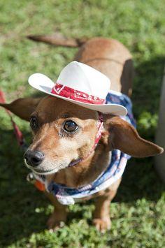 Cowboy Wiener Dog! by James Tarver, via Flickr