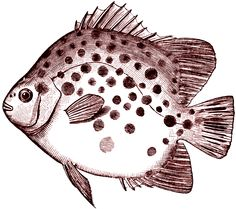 Free Digital Stamp - Spotted Fish Image